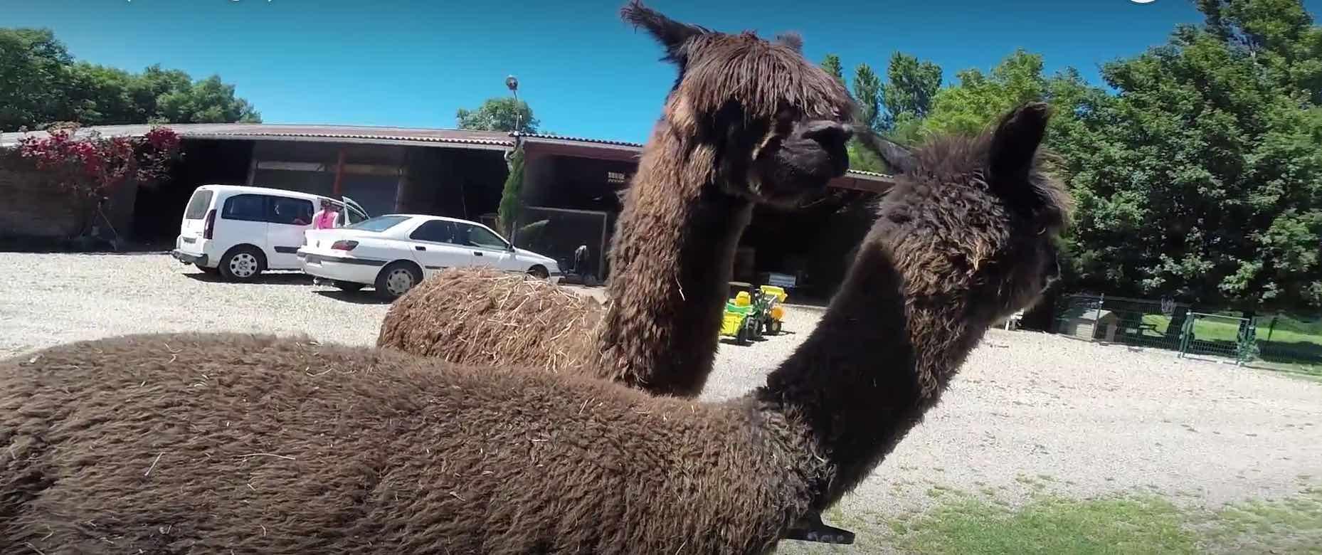 Balade à moto et visite d'un élevage – Vlog#29